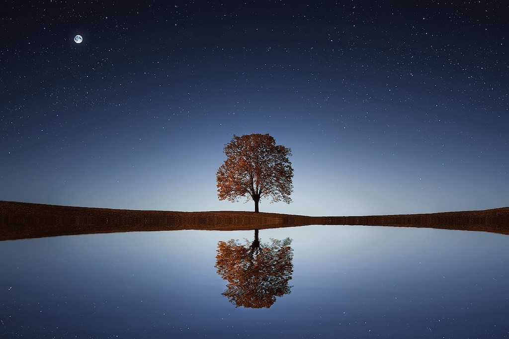 calm-tranquil-tree-relax