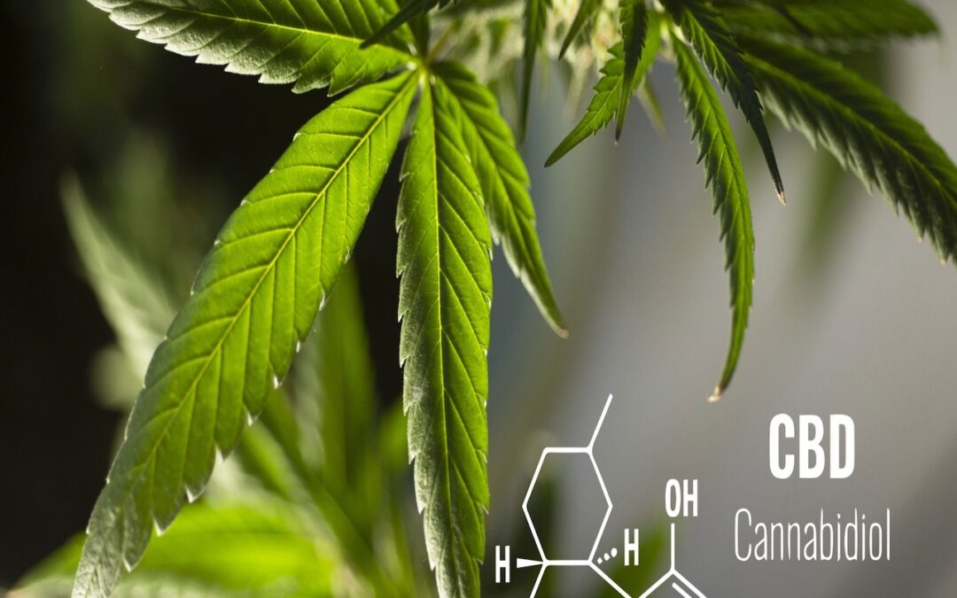 What Does CBN Do and How Is It Different From CBD? A Guide